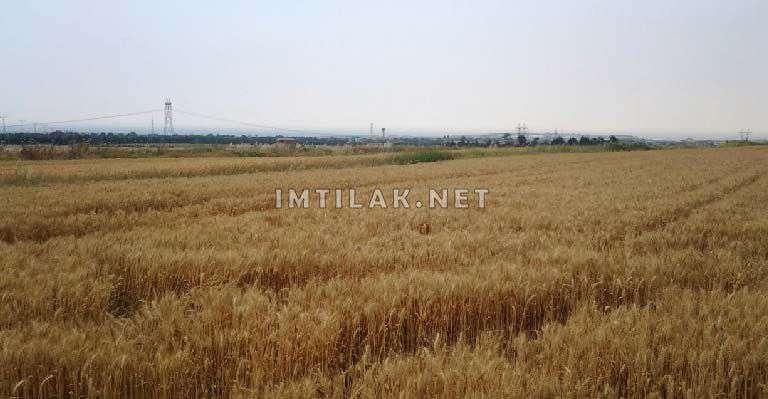 أراضي لبناء فلل والاستثمار في سليم باشا سيليفري