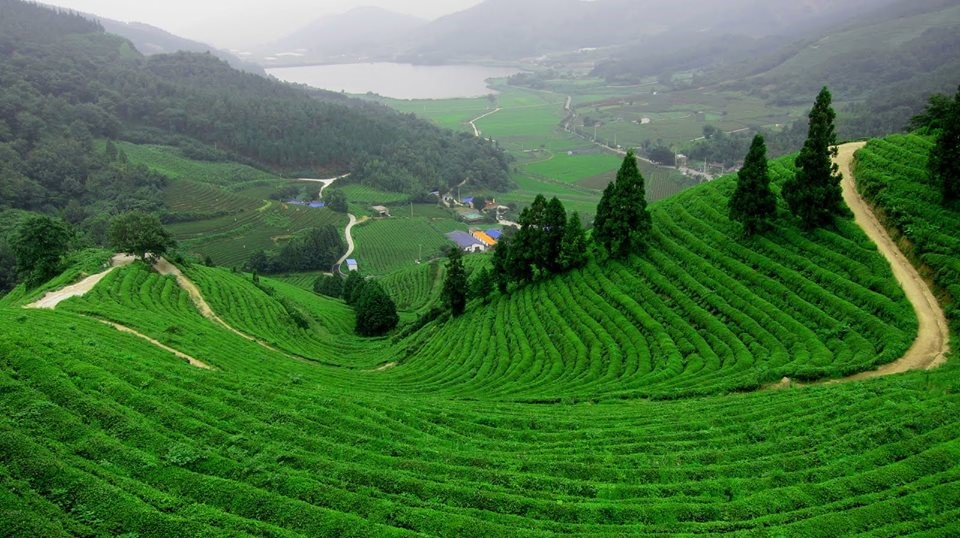 Agricultural land for sale in Antalya Turkey suitable for investment